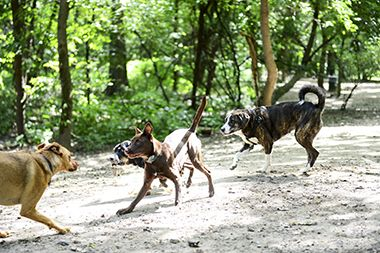 Minnehaha_Dog_Park_pups