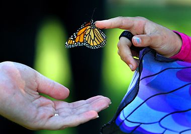 Monarch Festival_2015_touch