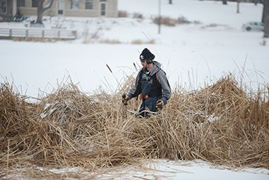 loring_pond_cattail_cutting_winter