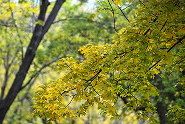 Deming_Heights_Park_leaves