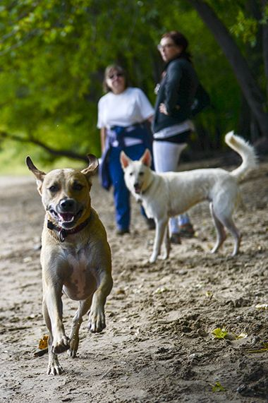 Minnehaha_Dog_Park_pup2