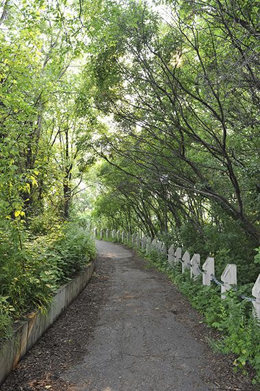 Marshall_Terrace_Park_walkingpath