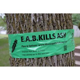 Emerald Ash Borer Tree Ribbon
