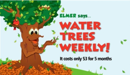 Elmer encourages residents to water trees weekly
