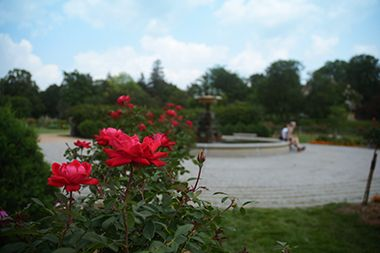 Lyndale Park_Rose Garden_fountain