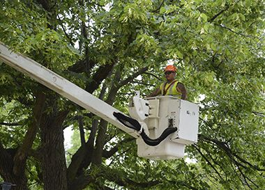 pruning in folwell park