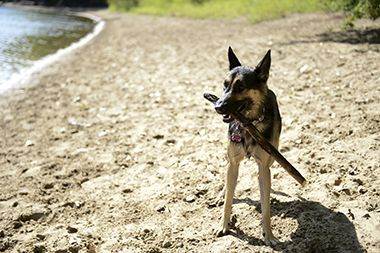 Minnehaha_Dog_Park_stick