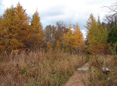 wirth_park_quaking_bog_autumn