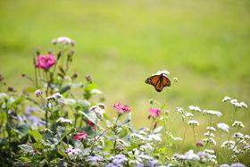 butterfly hummingbird garden
