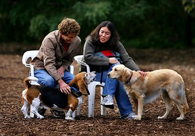 Lake of the Isles Dog Park in Fall 1
