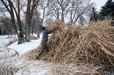 loring_pond_cattail_cutting_winter3