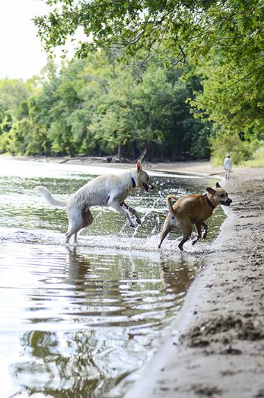 Minnehaha_Dog_Park_pups2