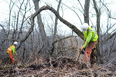 wirth_lessard_clearing_trees