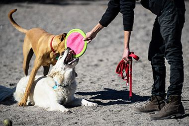 Lyndale_Farmstead_Off_Leash_Dog_Park_frisbee