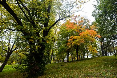 Deming_Heights_Park_trees