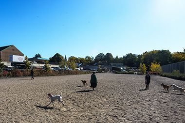Lyndale_Farmstead_Off_Leash_Dog_Park_wideshot