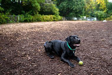 Franklin Terrace Off-Leash Dog Park
