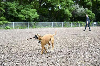 Franklin Terrace Dog Park