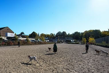 Lyndale Farmstead Off-Leash Dog Park