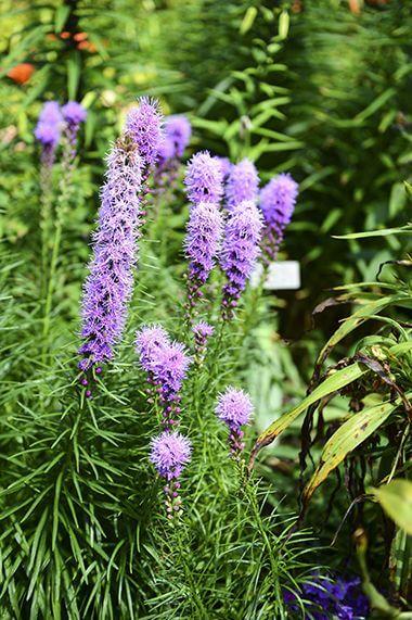 Annual-Perennial Garden