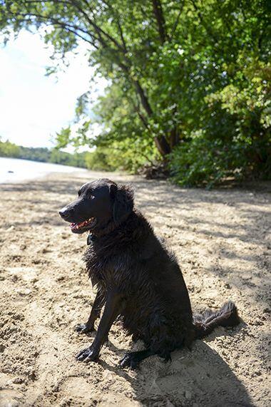 Minnehaha Off-Leash Dog Park