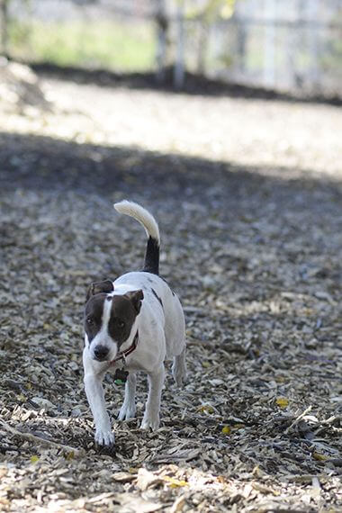 St. Anthony Parkway Off-Leash Dog Park