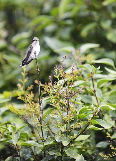 Lyndale Butterfly Hummingbird Garden