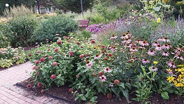 Perennial Echinacea and annual Zinnia 'Queen Red Lime'