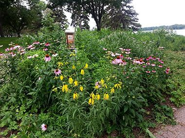 Nokomis Naturescape Garden