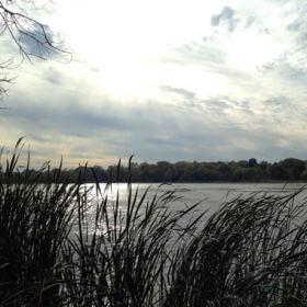 diamond lake wetlands