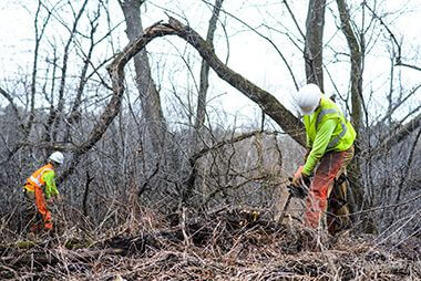 Wirth Lessard Vegetation Management