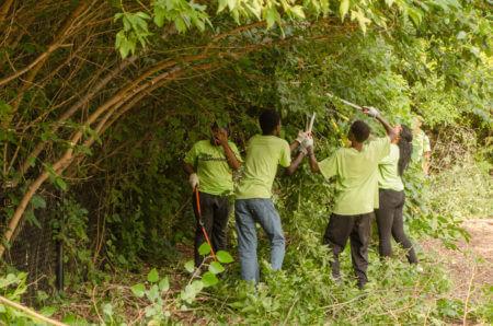 Teen Teamworks members doing yard work.